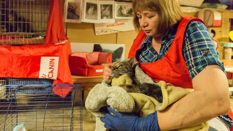 Four of the Hermitage cats were hospitalised for smoke inhalation and are in stable condition