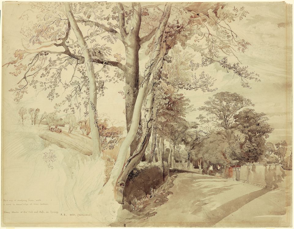 John Ruskin's Trees in a Lane, perhaps at Ambleside (1847)
