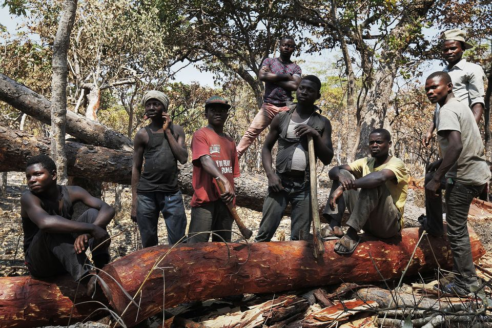 A team of loggers in the Democratic Republic of the Congo  by Lu Guang