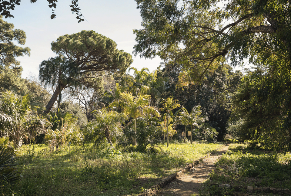 "Palermo's Botanical Garden was a ""key inspiration"" for the curatorial vision of Manifesta 12"