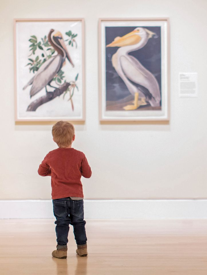 A young visitor admiring Audubon drawings