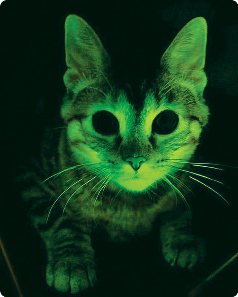 The digital print Glowing Cat (2014) is an example of a work by Hershman Leeson that refers to biotechnology