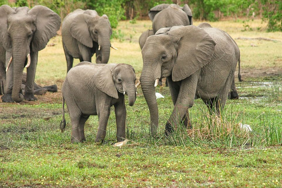 A law with draconian implications that will do little or nothing to protect the elephant
