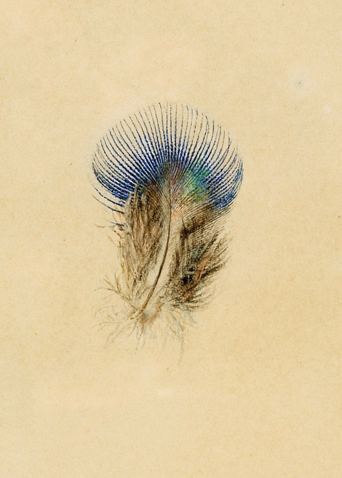 John Ruskin's Study of a Peacock's Breast Feather (1873)