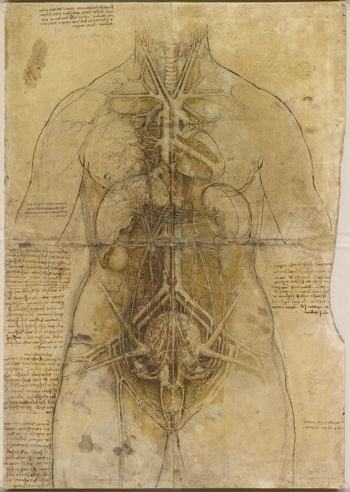 Leonardo da Vinci's The cardiovascular system and principal organs of a woman (around 1509-10) carries two fingerprints from the master artist
