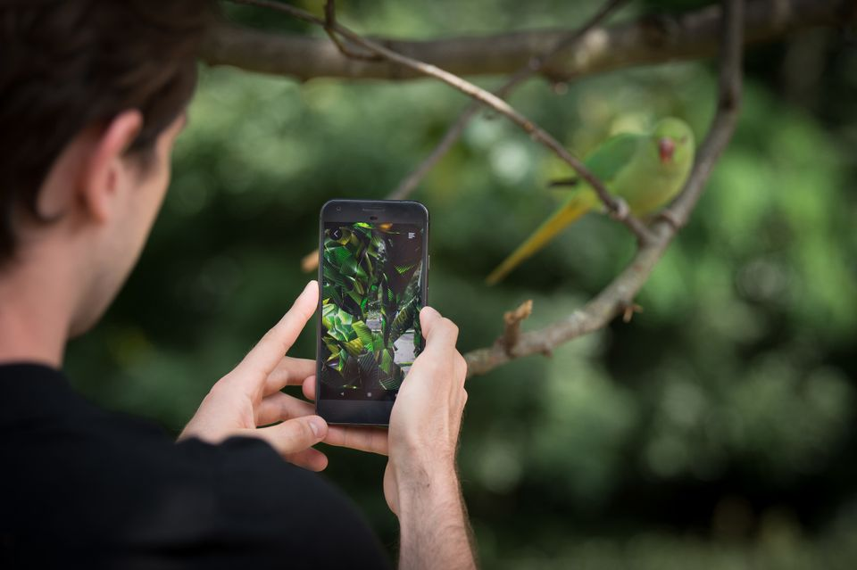 The natural world meets the virtual in Jakob Kudsk Steensen's augmented reality experience at Serpentine Galleries