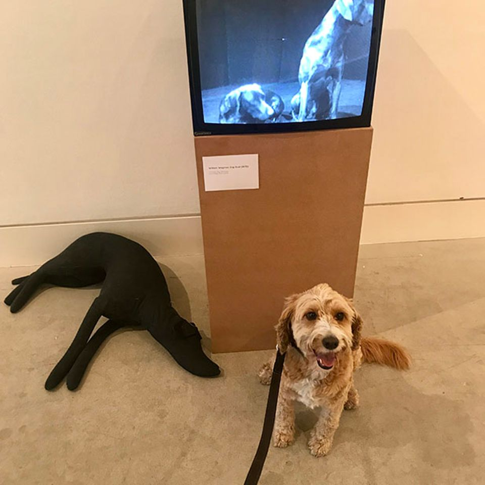 It's a dog-eat-dog art world: London show features canine-themed works chosen by cultured pooches
